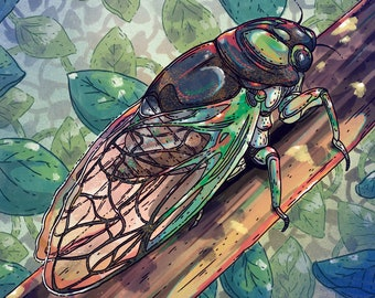 Cicada Insect Nature Illustration Giclée Print
