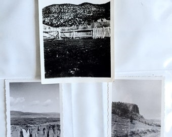 Nature 3 original Vintage prints
