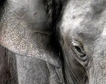 Elephant Print, Elephant Photo, Animal Photography, Animal Print, Wildlife, Elephant Picture, Elephant Closeup, Elephant Decor, Elephant