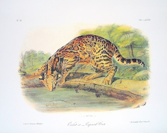 Ocelot or Leopard Cat 1989 Vintage Audubon Book Plate Page for Framing Naturalist Illustration