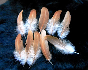 Cruelty free feathers - 10 all natural buff secondary wing feathers, from organic, free range chickens, orange wing feathers