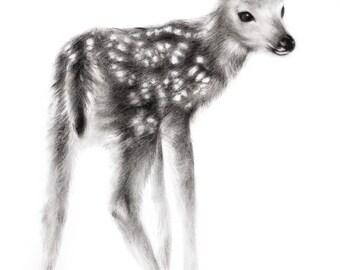 Fawn, 8x10 art print, wildlife nature canadian