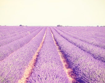 Lavender Field Art, Large Wall Art, French Photography, Purple Flower Prints