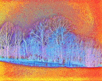 Abstract Tree Landscape 8x10 Modern Art Photography Print Winter Trees in Orange
