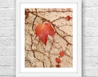 Nature Art, Botanical Art, Maple Leaf Art , Maple Leaf Art Printable, Nature 8x10, Maple Art, Leaf Art, Botanical Wall Decor, LivingRoom Art