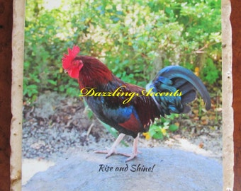 """Rooster Funny Coaster Rise and Shine! 1 or a Set of 4 Stones 4""""X4"""""""