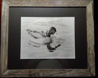 ORIGINAL Mallard Duck      Pencil Drawing