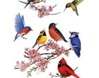 Songbirds of America Cardinal Robin Hummingbird, Finch Womans T Shirt