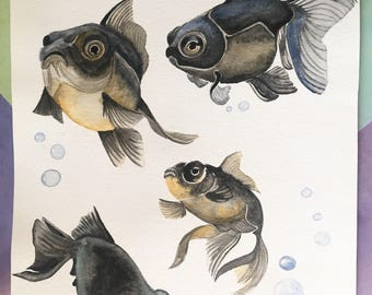 Black Moor Goldfish watercolor painting