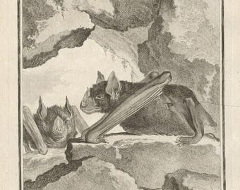 Bats - Antique French 18th century engraving.
