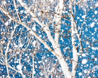 Birch Tree In Winter Snow Storm -Bare Branches -Blue & White  -Nature Photography - Home Decor Wall Art -Fine Art Print