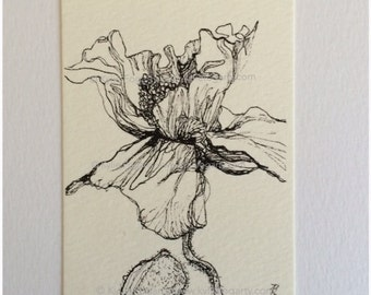 Black and White Open Poppy Flower Drawing - ACEO - Fine Art Print - Poppy Flower Study 3 - Wedding Thankyou Gift