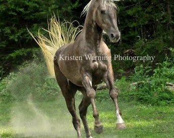 Equine Art, Equine Portrait, Horses, Drama in the Pasture, Horse Pictures, Pictures of Horses, Country Living