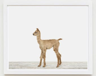 Baby Animal Nursery Art Print. Baby Alpaca. Safari Animal Wall Art. Animal Nursery Decor. Baby Animal Photo.