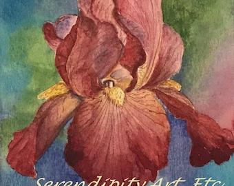 """Pink Iris - 5"""" x 7"""" Original Watercolor"""
