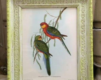 Antique lithograph exotic birds in baroque style frame