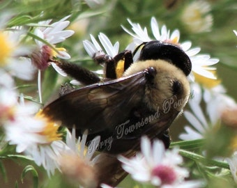 Bee in Flowers Closeup Photograph Matted & Signed