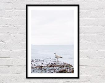 Seagull Print, Modern Coastal Decor, Bird Print, Beach Decor, Seagull Art, Sea Print, Blue Water, Ocean Photo, San Francisco Bay, Download