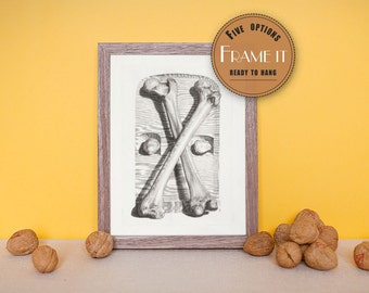 "Vintage illustration of femurs and kneecaps - framed fine art print, art of anatomy, 8""x10"" ; 11""x14"", FREE SHIPPING 160"