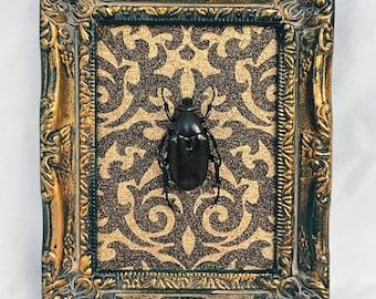 Victorian Black Flower Beetle