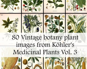 All 80 Medicinal plant illustrations from Köhler's Medicinal Plants volume 3 - High Res Printable Download - Vintage Botanical