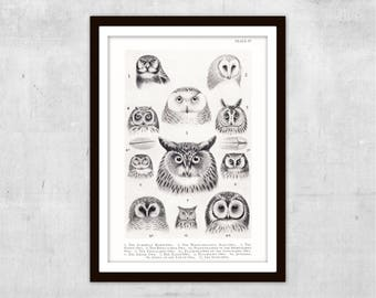 1938 BRITISH OWLS Rare Vintage Ornithology Print | Tawny, Barn, Snowy, Short-Eared, Hawk & Eagle Owl | Monochrome Bird Illustration