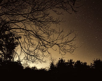 Autumn Night Series, HDR photograph, Gold and black, Fine art photographs, The Progression of Autumnal Night (Golden Night)