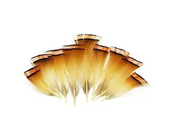Orange and Tan pheasant feathers