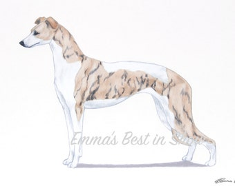 Whippet Hound Dog - Archival Fine Art Print - AKC Best in Show Champion - Breed Standard - Hound Group - Original Art Print