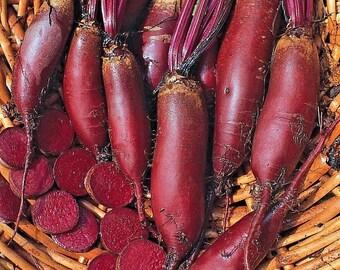 Beetroot Cylindra Min 600 seeds Vegetable