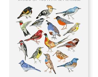 Birds of North America Fine Art Giclee Print