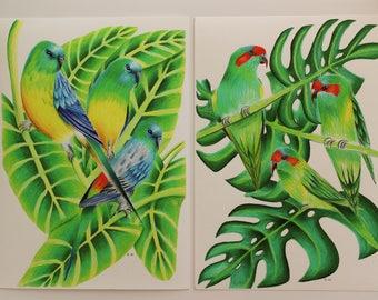 Coloured pencil bird prints