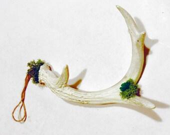 Antlers, Horn, deer, plant