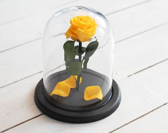 Beauty and the beast rose (Medium), Mother's day gift, forever yellow rose, Enchanted Rose, rose in glass, preserved rose, five  year rose