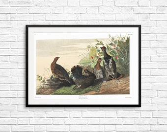 Spotted Grouse, antique bird art, vintage bird prints, antique bird posters, vintage birds, vintage wall art, Audubon posters, Audubon Book