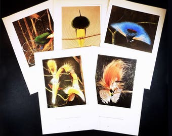 1950 Set of 5 Bird of Paradise Print. Original Antique Bird Print  Illustration Natural History Ornithological Plate Framing Home Decor