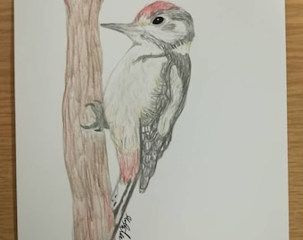 Great Spotted Woodpecker Graphite Drawing
