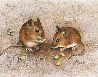 Mouse painting 'A pair of wood mice' by Jan Taylor.   ORIGINAL watercolor, not a print.