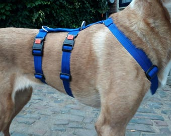 Cobalt Blue Anti-escape tool for Podenco, Galgo, Greyhound, Whippet