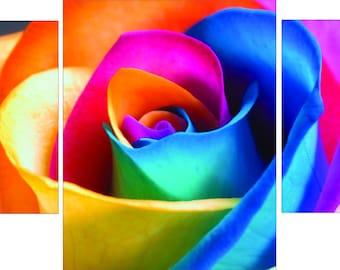 RAIBOW ROSE
