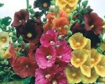 Alcea Hollyhock Flower Seed Mix / Perennial  50+