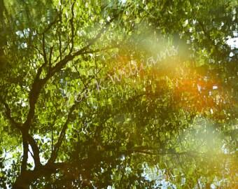 Summer Reflection, Digital Download