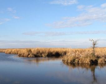 Landscape Art Print, Nature Photography Swamp Tree Winter Blue Gold Autumn Wall Art Wall Decor Zen
