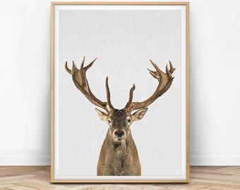 Deer Print, Deer Wall Art, Deer Photo, Deer Photography, Deer Decor, Deer Antler, Antler Print, Woodland Animal, Woodland Decor, Nursery Art