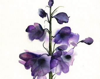 Delphinium - botanical print, watercolor botanical, watercolor flowers, cottage chic