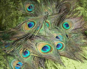 20 Feathers Peacock Eye approx. 10-15 cm large eyes