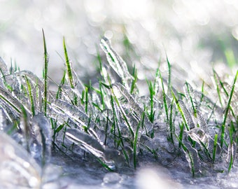 Frozen in Time   Fine Art Photography   Ice and grass   Art Print   Oregon Photography