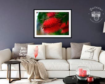 Print #224 Contemporary Photo Art Printable Decoration, Instant Download, Plant Photo Wall Art, Callistemon Wall Art