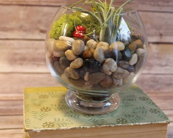 Glass Open Top Terrarium