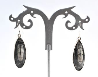 Orthoceras Artisan fossil earrings.